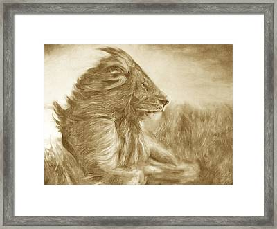 Lion Framed Print by Adrienne Martino