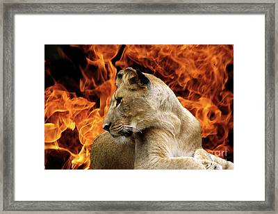 Lion And Fire Framed Print