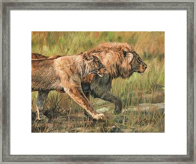 Lion And Lioness Framed Print