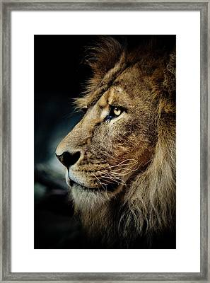 Lion Framed Print by Animus Photography
