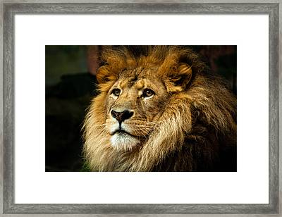 Lion Framed Print by Ann Clarke Images