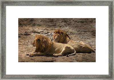 Lion Brothers Framed Print by Joseph G Holland