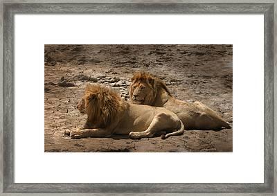 Lion Brothers Framed Print