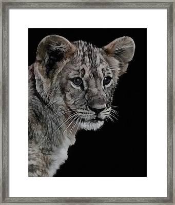 Lion Cub Portrait Framed Print by Ernie Echols