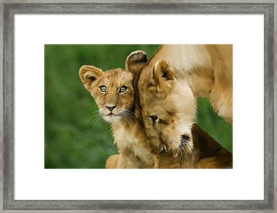 Lion Cub With Mother Framed Print by Julie L Hoddinott