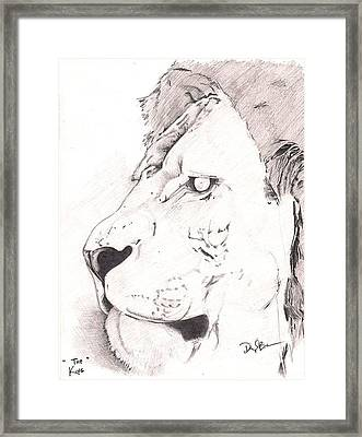Lion Framed Print by Darryl Barnes