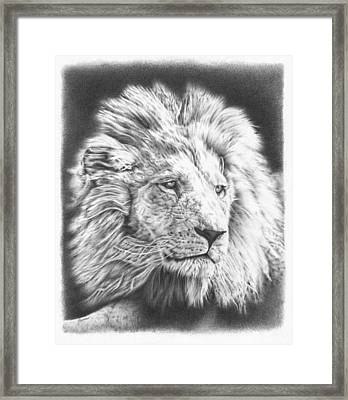 Fluffy Lion Framed Print