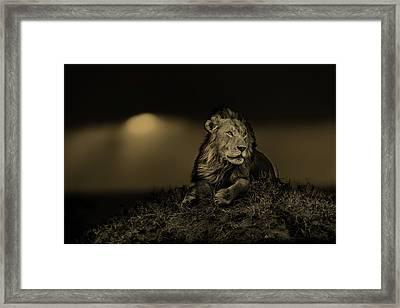 Lion Earless At Sunset In Masai Mara, Kenya Framed Print