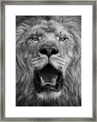 Framed Print featuring the photograph Lion Face by Ken Barrett