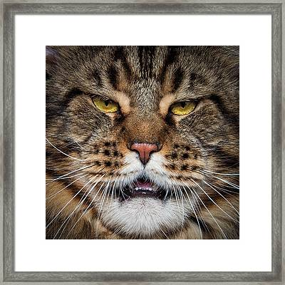 Framed Print featuring the photograph Tiger Face. by Robert Sijka
