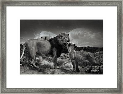 Framed Print featuring the photograph Lion Family by Christine Sponchia