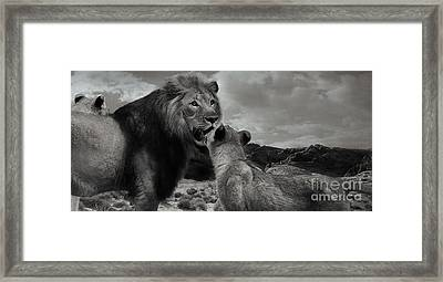 Framed Print featuring the photograph Lion Family Panorama by Christine Sponchia
