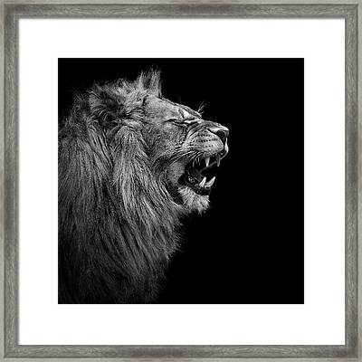 Lion In Black And White Framed Print by Lukas Holas