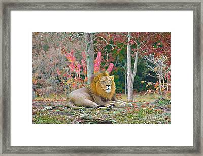 Lion In Color Edition 2 Framed Print by Judy Kay