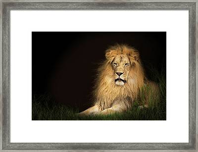 Lion In Grass With Copy Space Framed Print