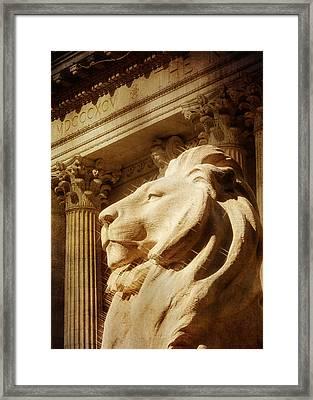 Lion In The Sun Framed Print by Jon Woodhams