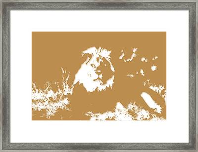 Lion Framed Print by Joe Hamilton