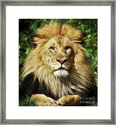 Lion King Framed Print by Cathy Mounts