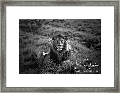 Framed Print featuring the photograph Lion King by Karen Lewis