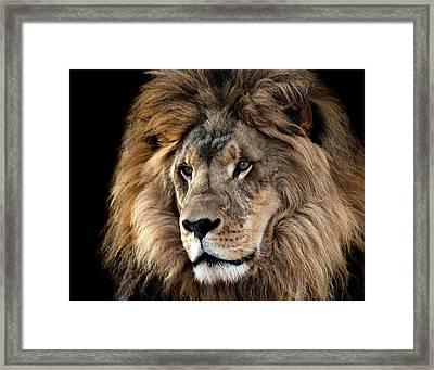 Lion King Of The Jungle 2 Framed Print