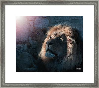 Lion Light Framed Print