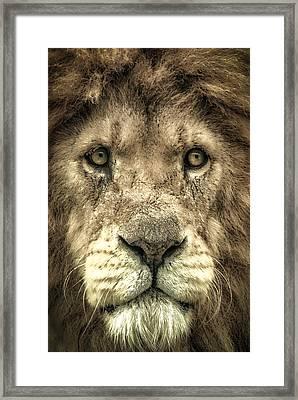 Framed Print featuring the photograph Lion Portrait by Chris Boulton