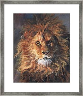 Lion Portrait Framed Print by David Stribbling