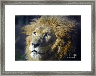 Framed Print featuring the photograph Lion Portrait by Savannah Gibbs