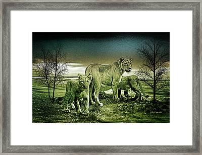 Lion Pride Framed Print by EricaMaxine Price