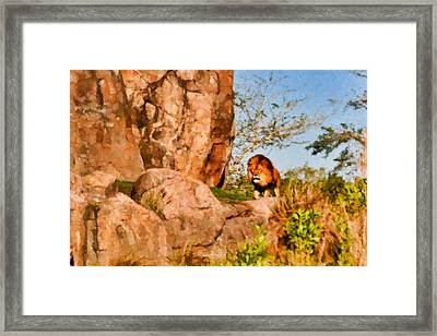 Lion Pride Framed Print by Paul Bartoszek
