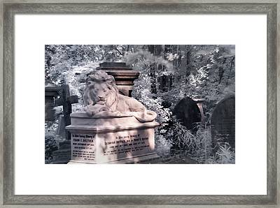 Lion Sleeping In The Shade Framed Print by Helga Novelli