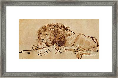 Lion Resting Framed Print