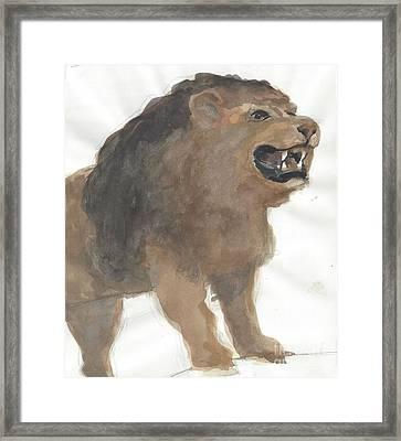 Lion Framed Print by Robert Bowden