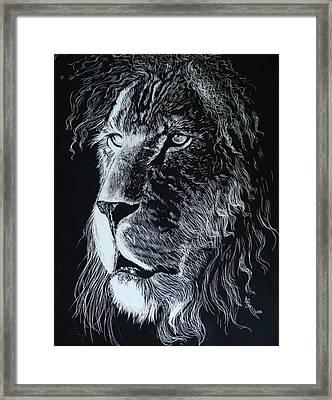 Lion Scratchboard Framed Print