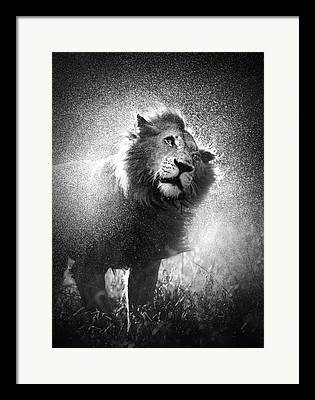 Big Cat Art Framed Prints