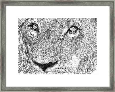 Lion Sketch Framed Print