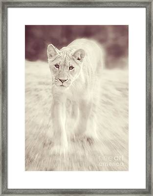 Framed Print featuring the photograph Lion Spirit Animal by Chris Scroggins