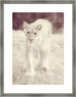 Lion Spirit Animal Framed Print
