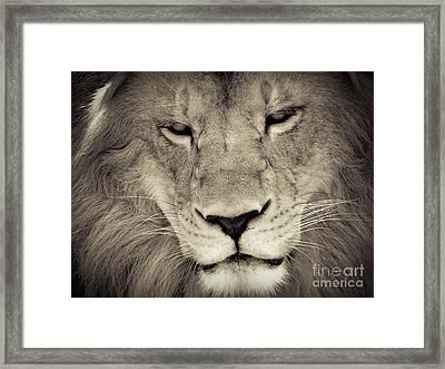 Lion Framed Print by Tonya Laker