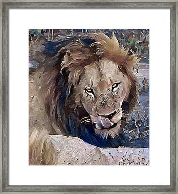 Lion With Tongue Framed Print