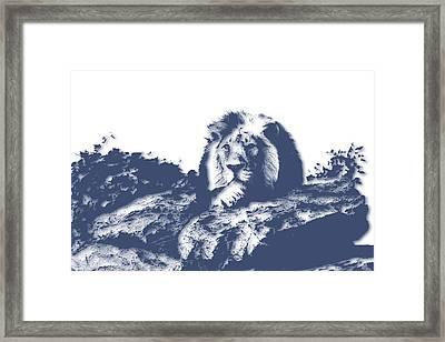 Lion3 Framed Print by Joe Hamilton