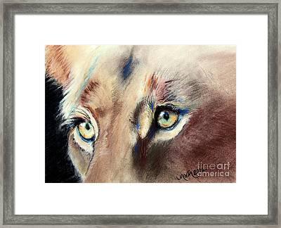 Lioness Eyes Framed Print