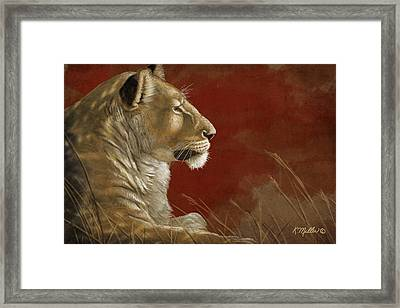 Lioness In The Shade Framed Print