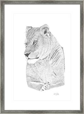 Lioness Framed Print by Patricia Hiltz