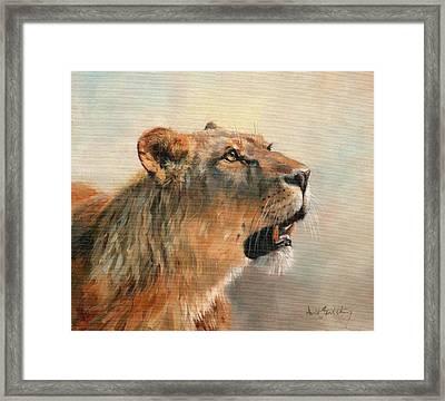 Lioness Portrait 2 Framed Print by David Stribbling