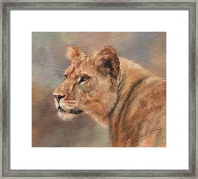 Lioness Portrait Framed Print by David Stribbling
