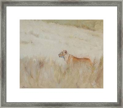 Lioness - Scent Ahead Framed Print by Ron Wilson
