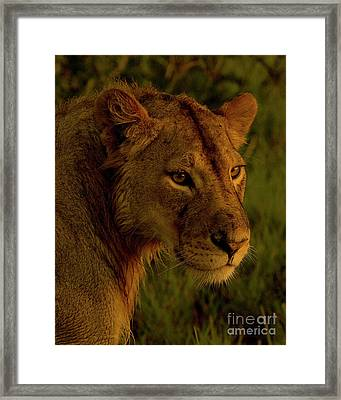 Lioness-signed-#6947 Framed Print