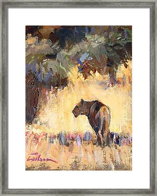 Lioness Stalking Framed Print by Ron Wilson