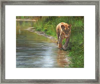 Lioness. Water's Edge Framed Print by David Stribbling